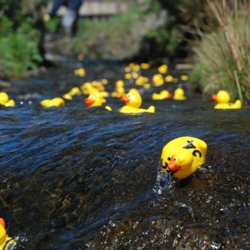 20th May – Duck Races Running Order